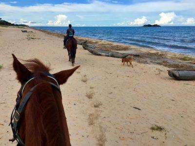 Malawi Kande Horse2