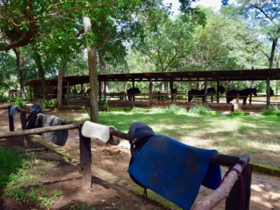 Malawi Kande Horse3