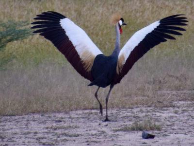 Zambia South Luangwa Bird2