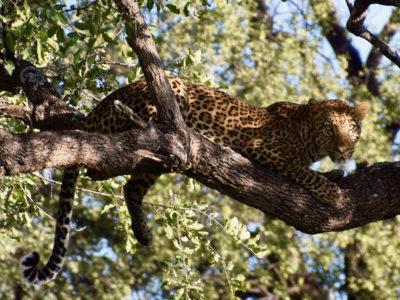 Zambia South Luangwa1