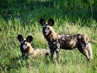 Zambia South Luangwa3