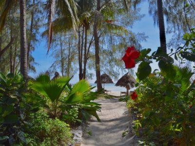 Zanzibar_Paje2
