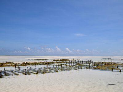 Zanzibar_SeaweedFarm1