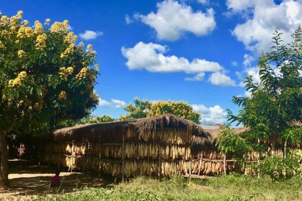 Malawi MSYDM Tabacco