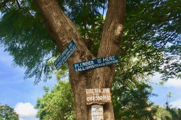 Malawi MSYDM Treesign
