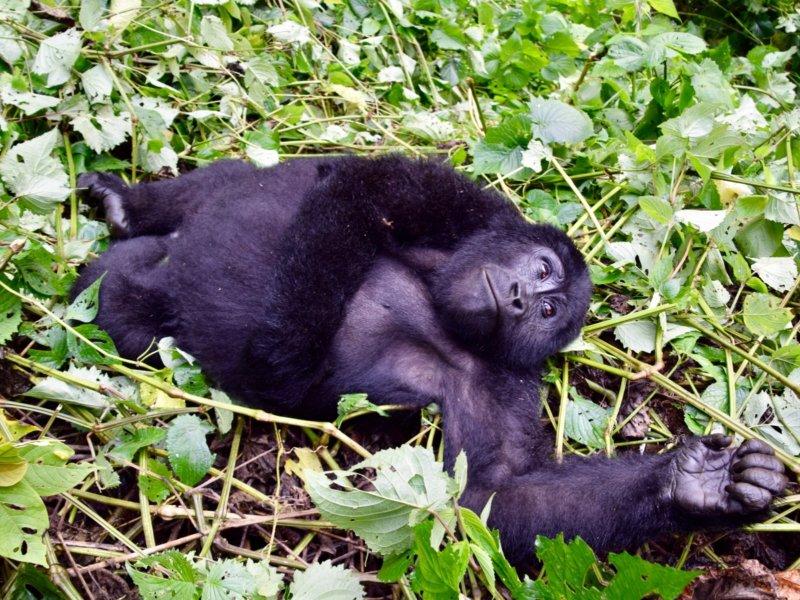 Rwanda_VolcanoesNP2