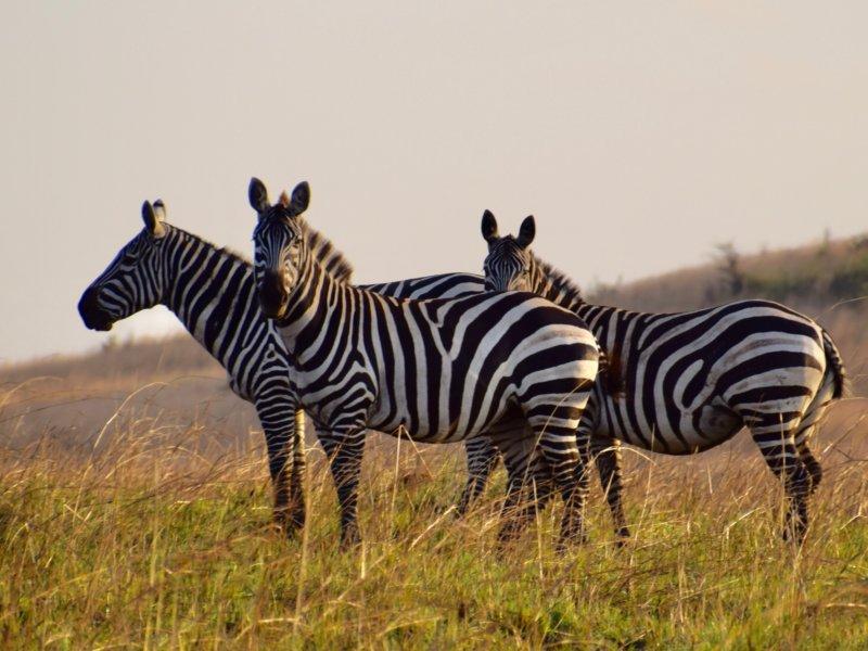 Uganda_KidepoNP1