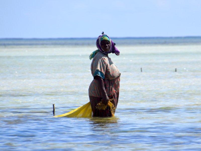 Zanzibar_SeaweedFarm2